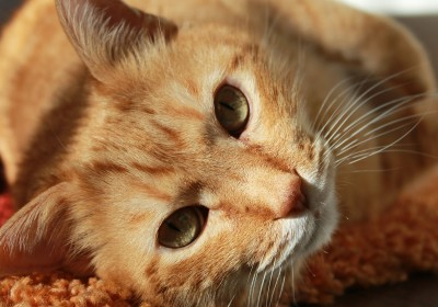 10 gatunków zwierząt trzymanych w domu